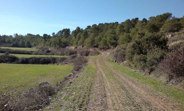 Pla tècnic de gestió i millora forestal de l'Albarell