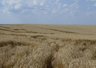 Agricultura i cultius propis a Romania