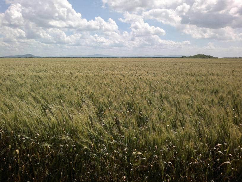Inversió en agricultura: millora explotacions i nous cultius